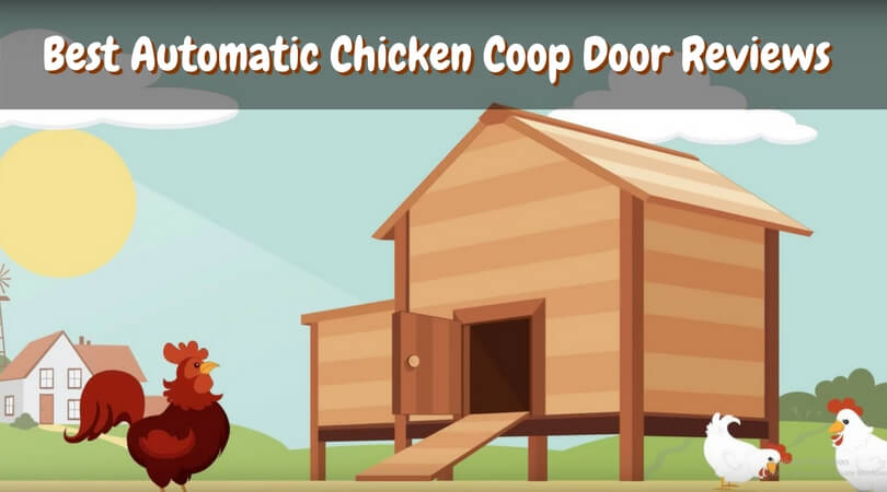 & Best Automatic Chicken Coop Door Reviews of 2018 | Top Door Openers