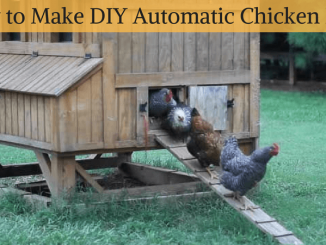How to Make DIY Automatic Chicken Door