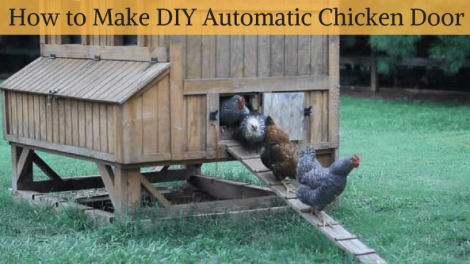 diy automatic chicken coop door chicken coop door ideas