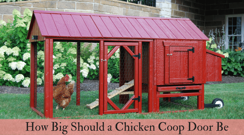 How Big Should A Chicken Coop Door Be Know Coop And Door