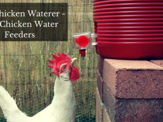 Best Chicken Waterer