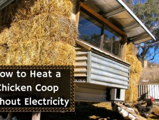 How to Heat a Chicken Coop without Electricity