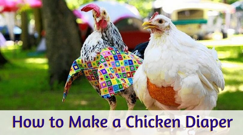 How to Make a Chicken Diaper