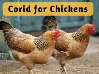 corid dosage chickens