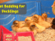 Best Bedding for Ducklings