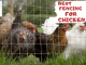 Best Fencing For Chicken