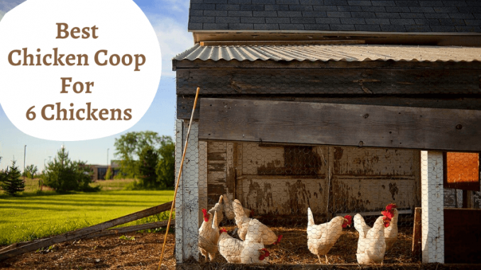 Best Chicken Coop For 6 Chickens