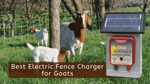 Best Electric Fence Charger for Goats
