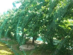 CandyHome Green Anti-bird Protection Mesh